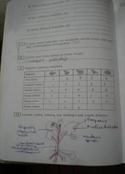 Biologija 10 klasei 12 puslapis nemokami pratybų atsakymai