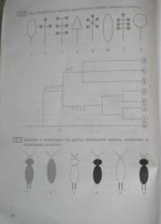 Biologija 10 klasei 14 puslapis nemokami pratybų atsakymai