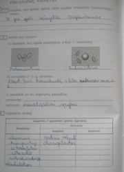 Biologija 10 klasei 18 puslapis nemokami pratybų atsakymai