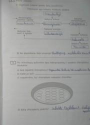 Biologija 10 klasei 19 puslapis nemokami pratybų atsakymai