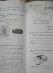Biologija 10 klasei 54-55 puslapis nemokami pratybų atsakymai