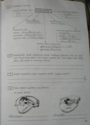 Biologija 10 klasei 55 puslapis nemokami pratybų atsakymai