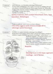 Biologija 7 klasei 1 dalis 29 puslapis nemokami pratybų atsakymai