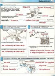 Biologijos pratybos 7 klasei 21 puslapis nemokami pratybų atsakymai