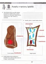 Gamta ir zmogus 6 klasei 1 dalis 41 puslapis nemokami pratybų atsakymai